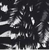 Estampa Zebra Preto e Branco